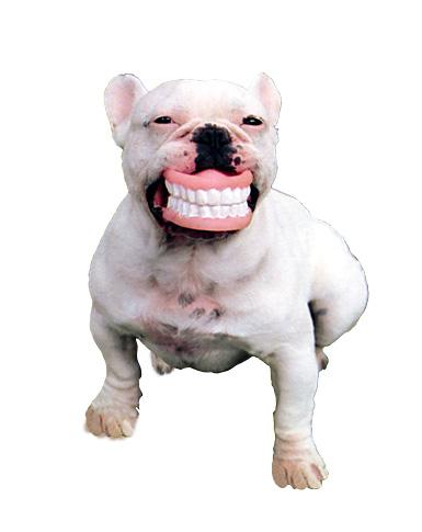 dogteeth.jpg